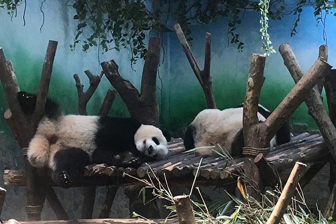 ジャアントパンダ保護センター