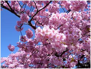花粉シーズンの開始
